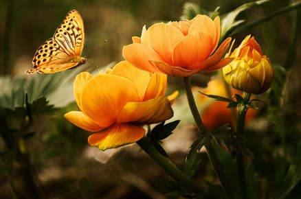 flowers-background-butterflies-beautiful-874521186044374.jpeg