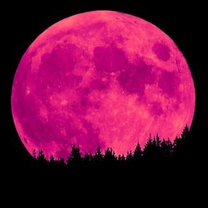 pink-moon