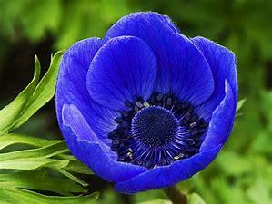 bluefl