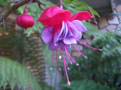 exotic_flower.jpg