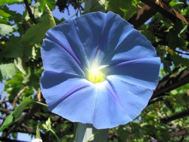 Blue-Flowers-Wallpapers.jpg