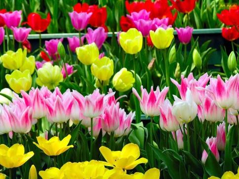 flower-flower-garden-colorful-flowers-color-colors-pink-mna-nature-flower-flower-garden-l-efe7854e81d7ed8c.jpg