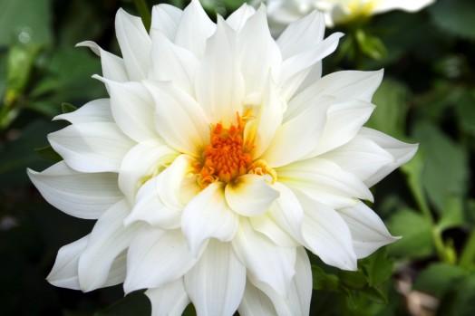White Flower-1